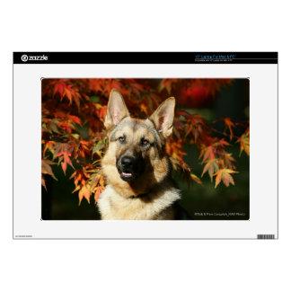 German Shepherd Autumn Leaves Laptop Decal