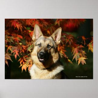 German Shepherd Autumn Leaves Poster