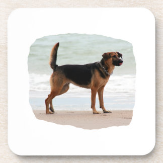 German Shepherd beach stand tongue out Beverage Coaster