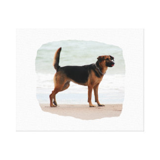 German Shepherd beach stand tongue out Stretched Canvas Prints