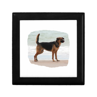 German Shepherd beach stand tongue out Gift Box