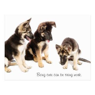 """German Shepherd """"Being Cute"""" Dog Postcard"""