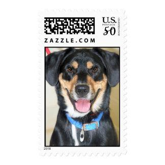 German Shepherd/Black Lab Mix Postage Stamps