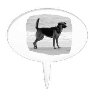German Shepherd bw beach stand tongue out Cake Topper