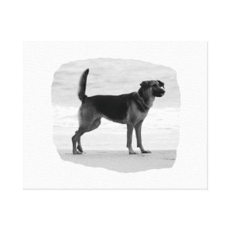German Shepherd bw beach stand tongue out Gallery Wrap Canvas
