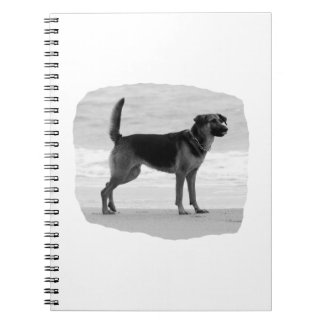 German Shepherd bw beach stand tongue out Spiral Notebook