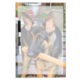 German Shepherd by Shirley Taylor Dry Erase Board