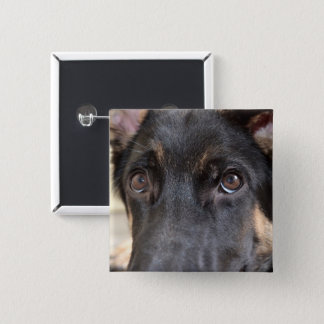 German Shepherd by Shirley Taylor Pinback Button