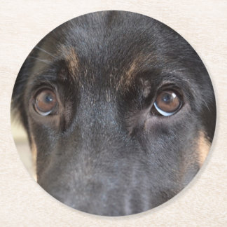German Shepherd by Shirley Taylor Round Paper Coaster