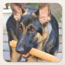 German Shepherd by Shirley Taylor Square Paper Coaster