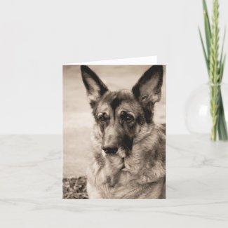 German Shepherd Card card