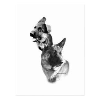 German Shepherd Charcoal 2 Postcard