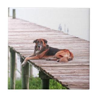 German shepherd cross dog lying on jetty ceramic tile