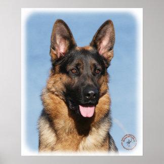 German Shepherd Dog 9Y554D-150 Poster