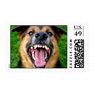 German Shepherd  Dog Bares Teeth Postage