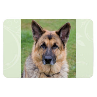 German Shepherd dog beautiful photo magnet