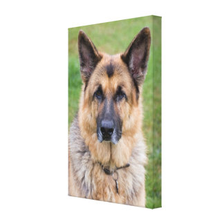 German Shepherd dog beautiful photo wrapped canvas Canvas Print