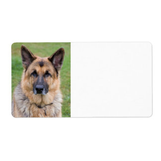 German Shepherd dog blank custom address labels
