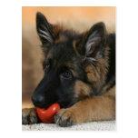 German Shepherd Dog Design Postcard