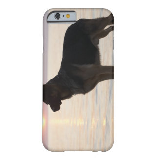 German Shepherd dog on Georgian Bay, Ontario, Barely There iPhone 6 Case