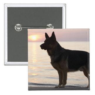 German Shepherd dog on Georgian Bay, Ontario, Button