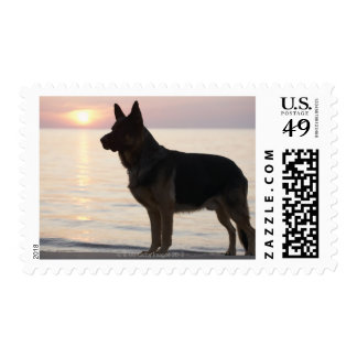 German Shepherd dog on Georgian Bay, Ontario, Postage