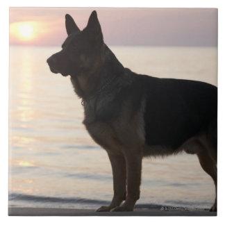 German Shepherd dog on Georgian Bay, Ontario, Ceramic Tile