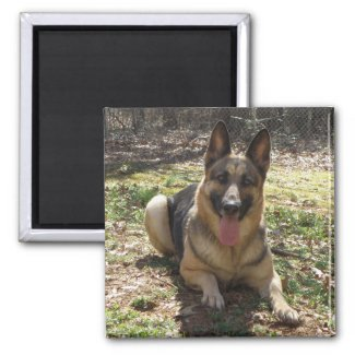 German Shepherd Dog Picture Magnet magnet