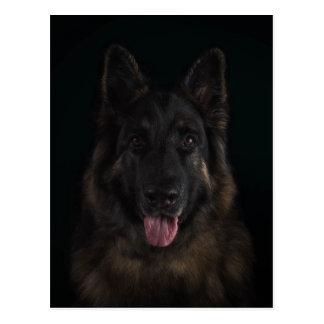 German shepherd dog portrait postcard