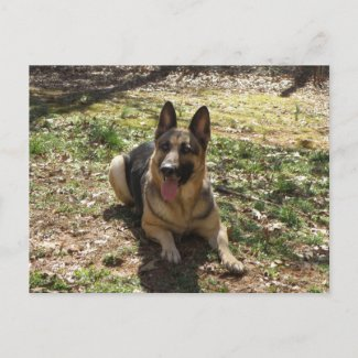German Shepherd Dog Postcard postcard