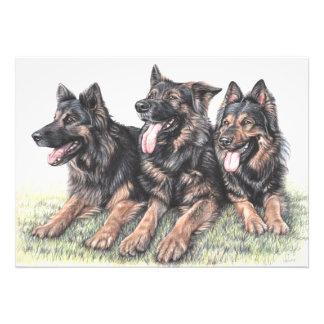 German Shepherd Dogs Photographic Print