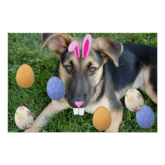 German Shepherd Easter Puppy Poster