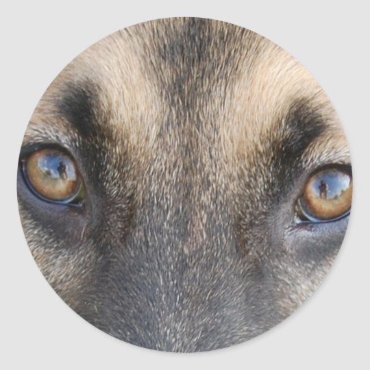 German Shepherd Eyes Classic Round Sticker