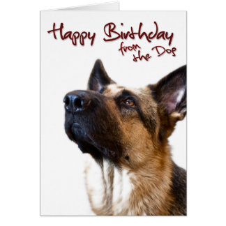 German Shepherd fromthedog1 Greeting Card