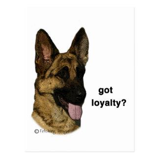 German Shepherd - got loyalty? Postcard