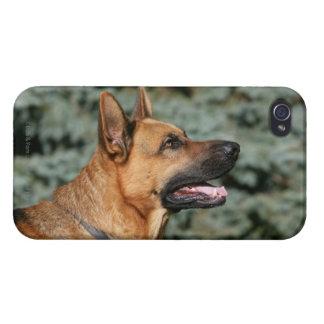 German Shepherd Headshot 1 Case For iPhone 4