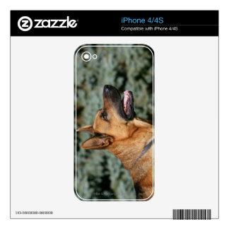 German Shepherd Headshot 1 Decal For iPhone 4