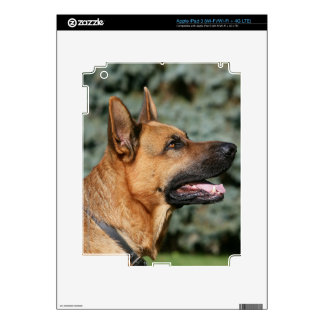 German Shepherd Headshot 1 Skin For iPad 3