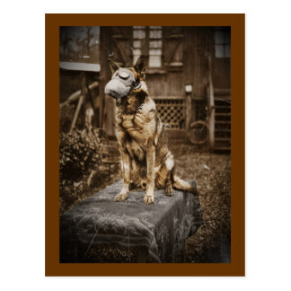 German Shepherd in Gas Mask Postcard