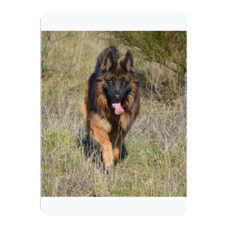 german-shepherd-in motion.png card
