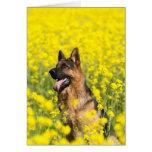 German Shepherd in mustard seed greeting card