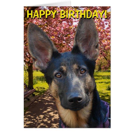 german shepherd in park birthday card  zazzle
