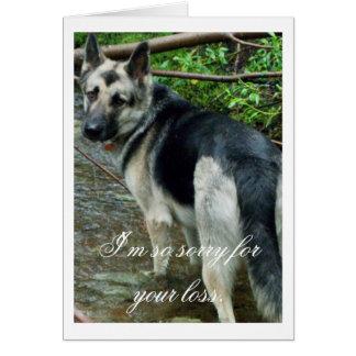 German Shepherd in the Creek; Sympathy Card