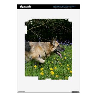 German Shepherd in Yellow Flowers iPad 3 Decals