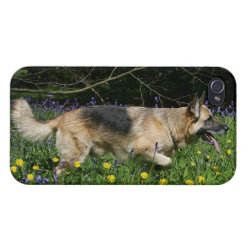 German Shepherd in Yellow Flowers iPhone 4/4S Case