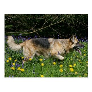 German Shepherd in Yellow Flowers Post Cards
