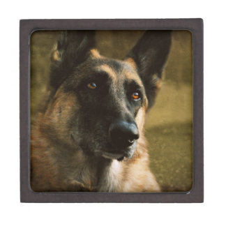 German Shepherd Jewelry Box