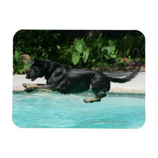 German Shepherd Jumping in Water Magnet