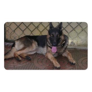 german shepherd laying.png business card template