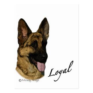 German Shepherd - Loyal Postcard